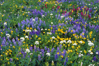 LDSC010186-Alpine-Wildflowers,-lupine,-arnica,-yarrow,-paintbrush